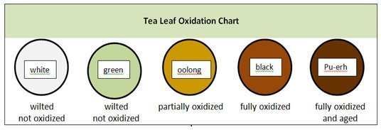 Tea leaf oxidation chart